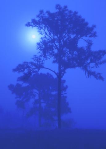 A photograph of the moon glowing through trees with fog