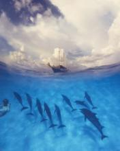 A photo of a boat above water and 10 dolphines swimming alongside a diver underneath the water