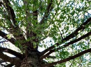 A green tree